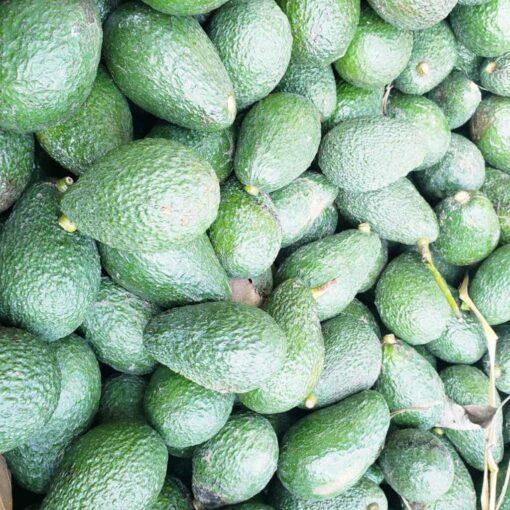 Organic California Avocados